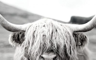 Year of the OX – A forecast by Lillian Pearl Bridges